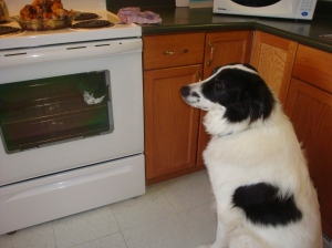 Bob guarding the oven and chicken legs from all intruders!!